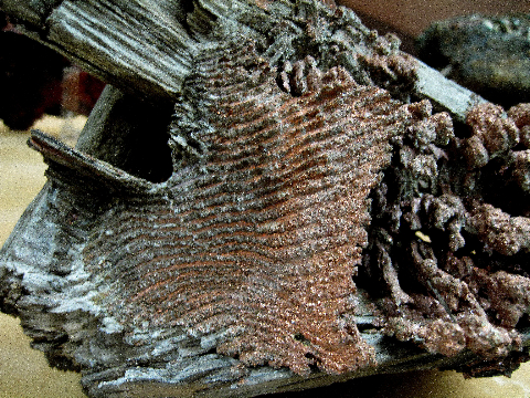 Copper on Wood, Ray Mine, Pinal Co., AZ